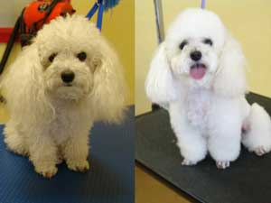Grooming Pictures!